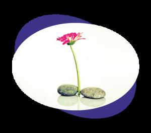 elipse-mindfulness-hover-center